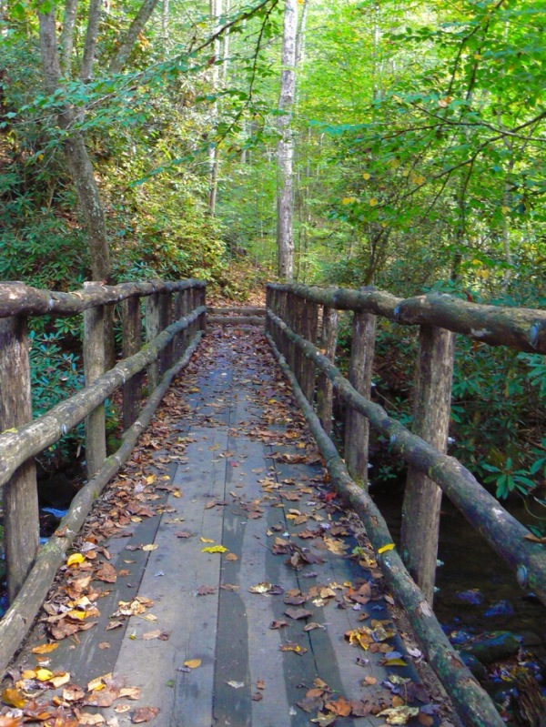 bridge on trail at joyce kilmer memorial forest - 1