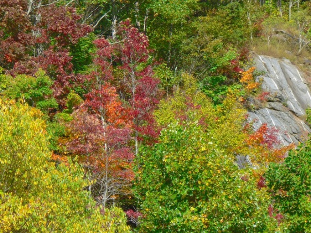 fall color on the cherohala skyway