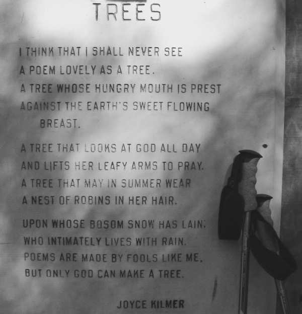 Joyce Kilmer Trees poem photo - 1