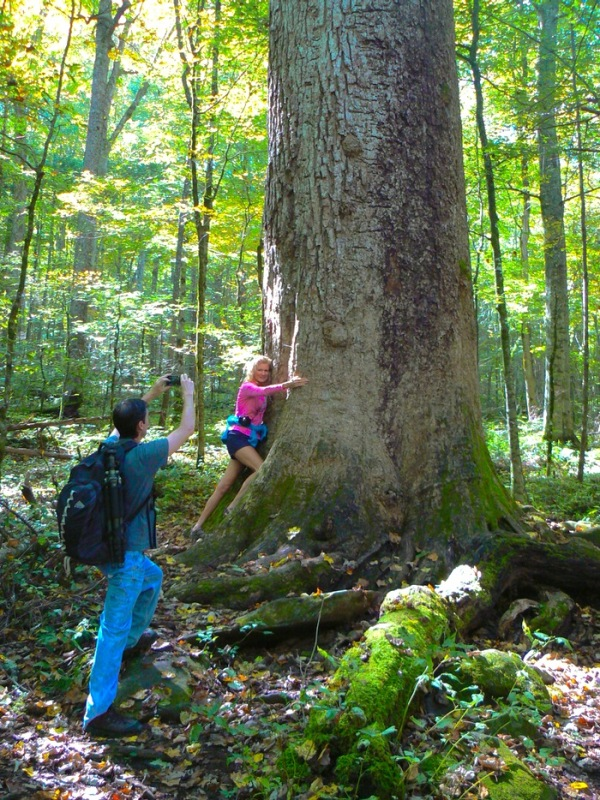 rachelle siegrist with big tree Joyce Kilmer memorial forest - 1