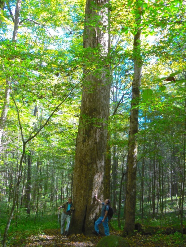 wes siegrist with big tree Joyce Kilmer memorial forest - 1