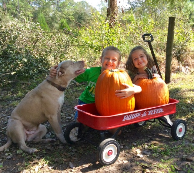cute kids and dog photo