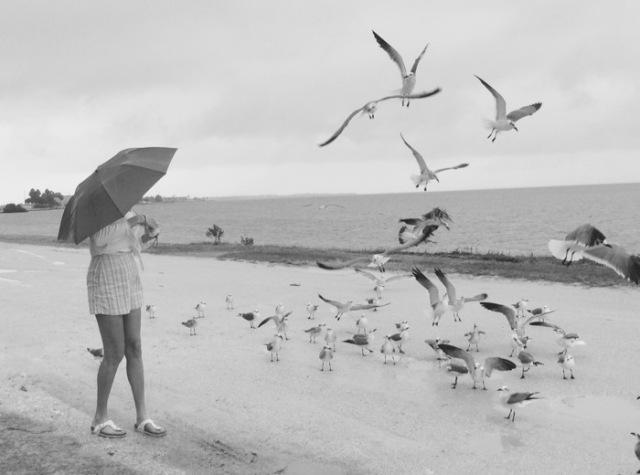rachelle siegrist feeding seagulls near clearwater