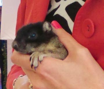 rachelle siegrist holding a baby fox squirrel 20th PWAF 15 - 1