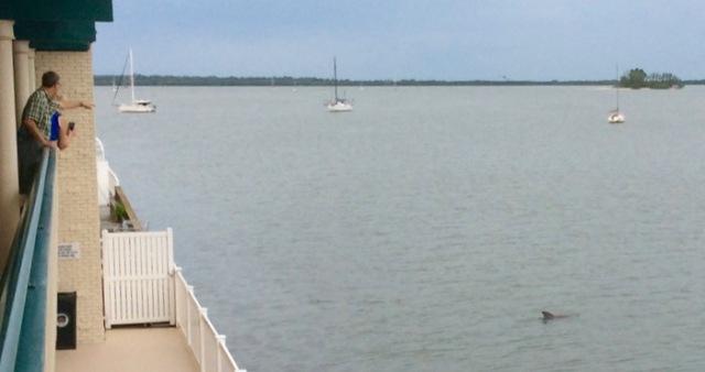 wes siegrist watching dolphins in dunedin FL