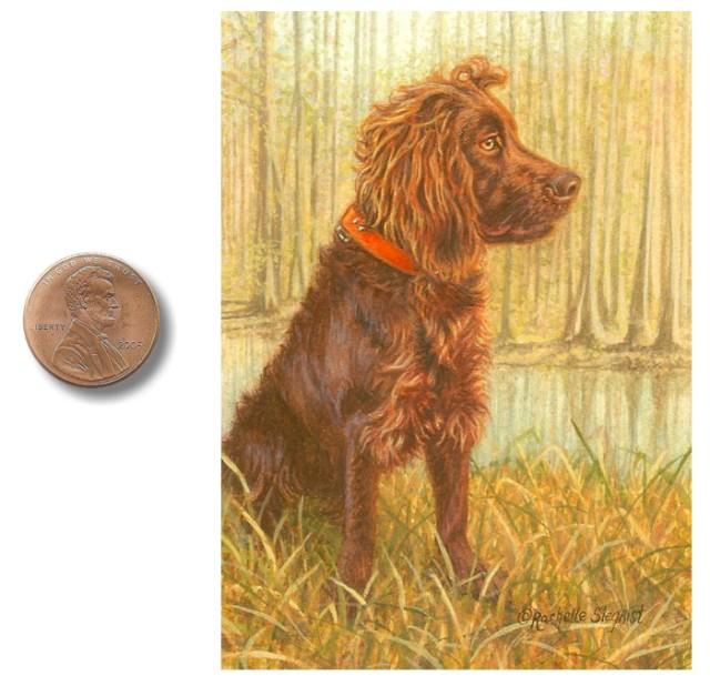 Boykin Spaniel dog painting by Rachelle Siegrist.jpg