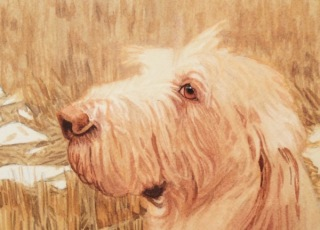 dog painting commission spinone italiano by rachelle siegrist - 4