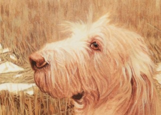 dog painting commission spinone italiano by rachelle siegrist - 5