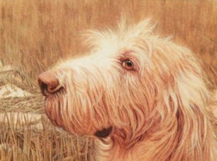 dog painting commission spinone italiano by rachelle siegrist - 6