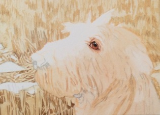 dog painting commission spinone italiano by rachelle siegrist2 - 1