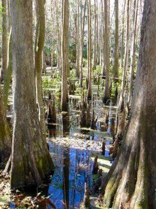 cypress hammock trail