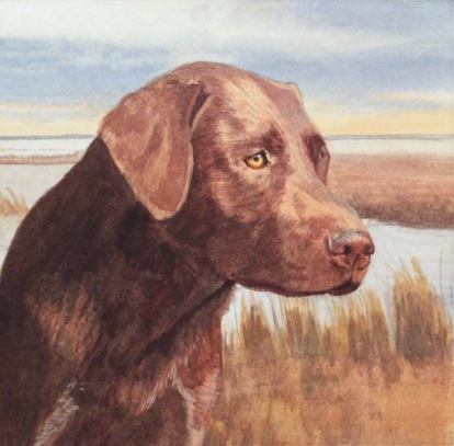 lab dog painting in progress by rachelle siegrist - 1.jpg