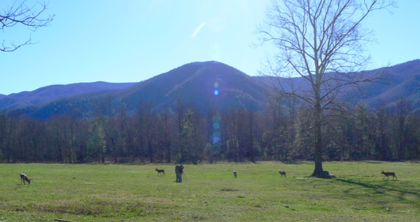 photographing deer in Cades Cove - 1