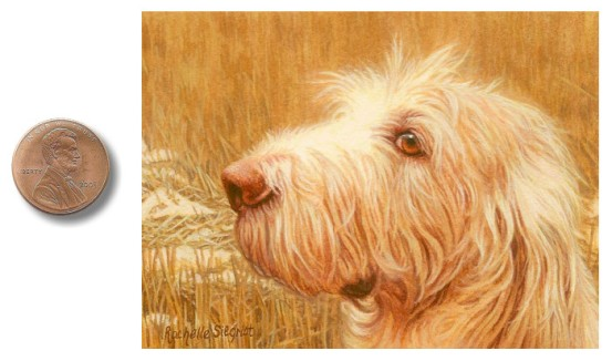 Spinone Italiano Dog painting by Rachelle Siegrist.jpg