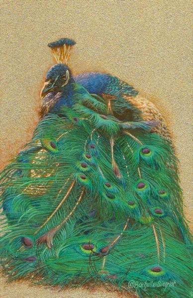 peacock painting by Rachelle Siegrist.jpg