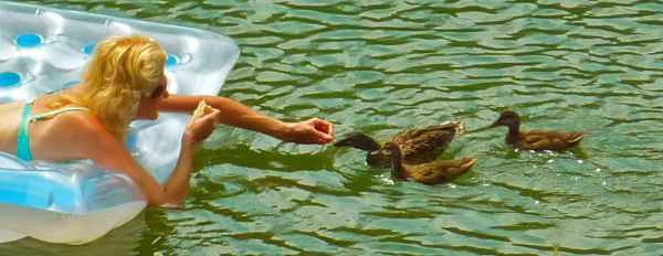 rachelle siegrist swimming with ducks.jpg