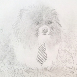 Pomeranian drawing commission a dog painting