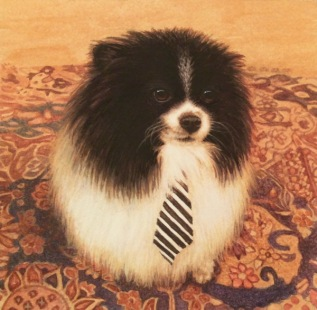 Pomeranian painting commission a dog painting5
