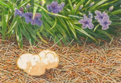 Under the Mexican Petunias dove painting.jpg