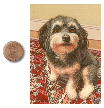Havanese dog painting by Rachelle Siegrist