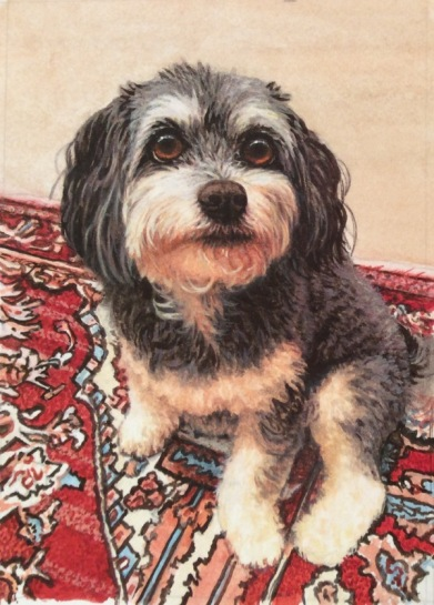 havanese dog painting commission.jpg