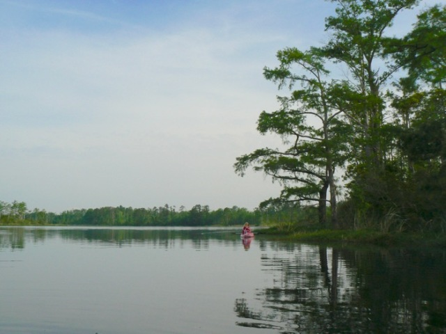 kayaking milltail creek in alligator river national wildlife refuge