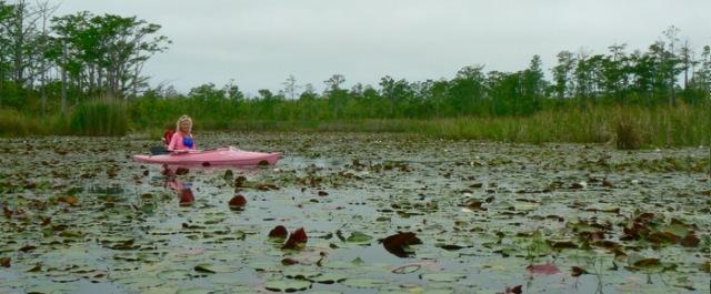 liies blooming at alligator river national wildlife refuge.jpg