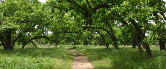 oak grove at south Llano river state park.jpg