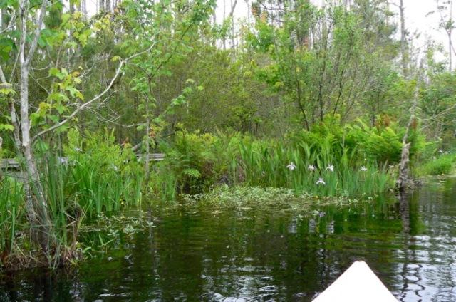 paddling trail at alligator river national wildlife refuge.jpg