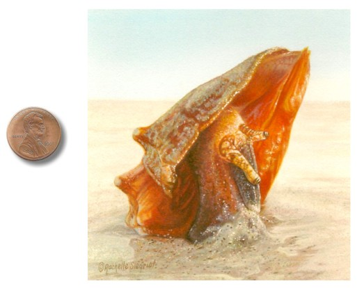 seashell painting miniature by rachelle siegrist.jpg