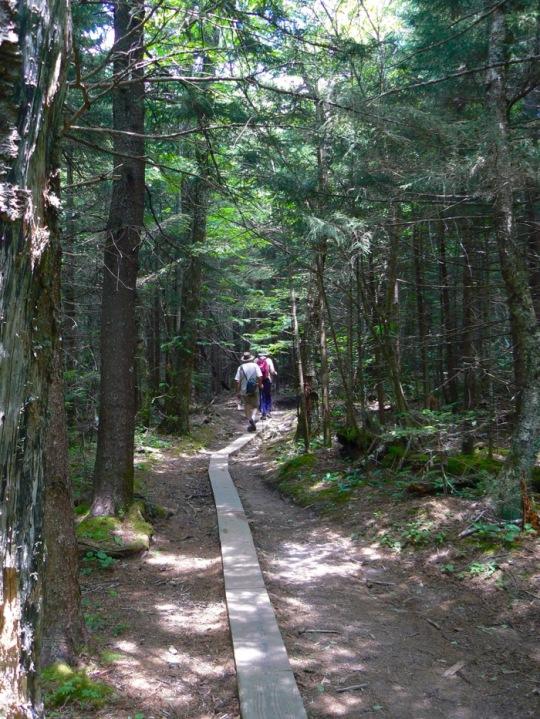 hiking the andrews bald trail.jpg