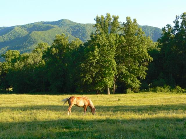horse in cades cove.jpg