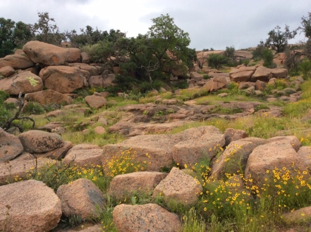 wildflowers at Enchanted Rock state park.jpg