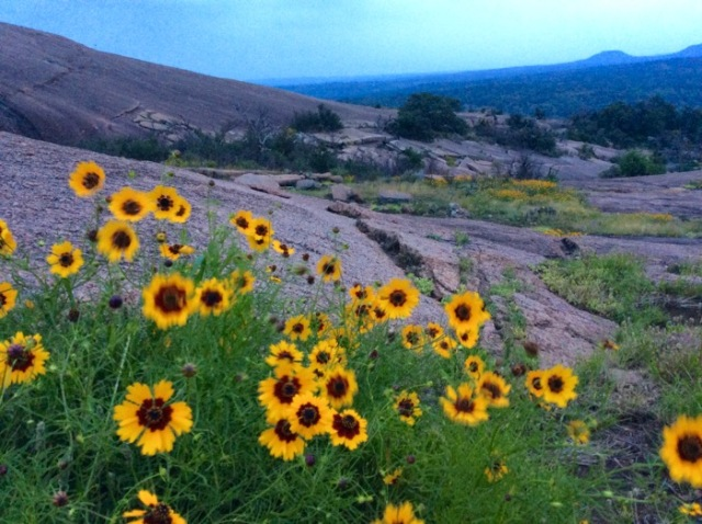 wildflowers on enchanted rock.jpg