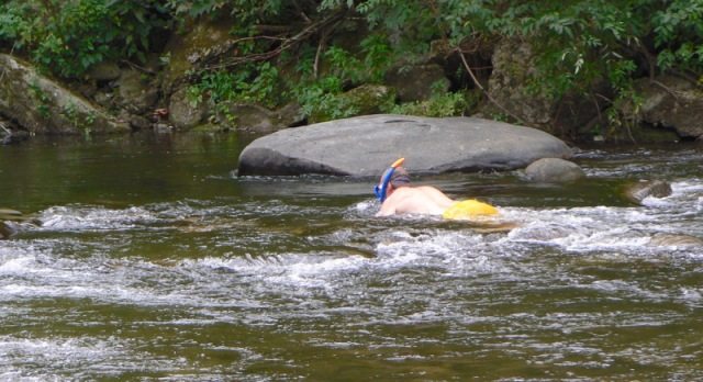 snorkeling the little river.jpg