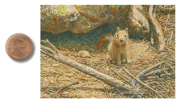 golden-mantled_ground_squirrel_by_wes_siegrist
