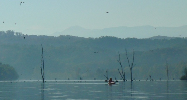kayaking with tree swallows.jpg
