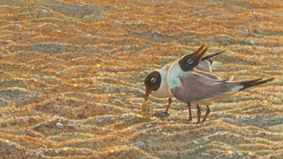 no-laughing-matter-seagull-painting-by-wes-siegrist