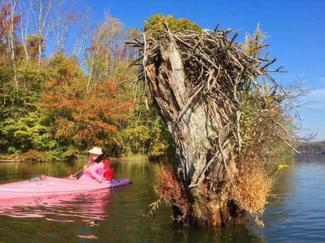 osprey nest .jpg