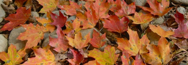 fall-leaves-in-the-smokies