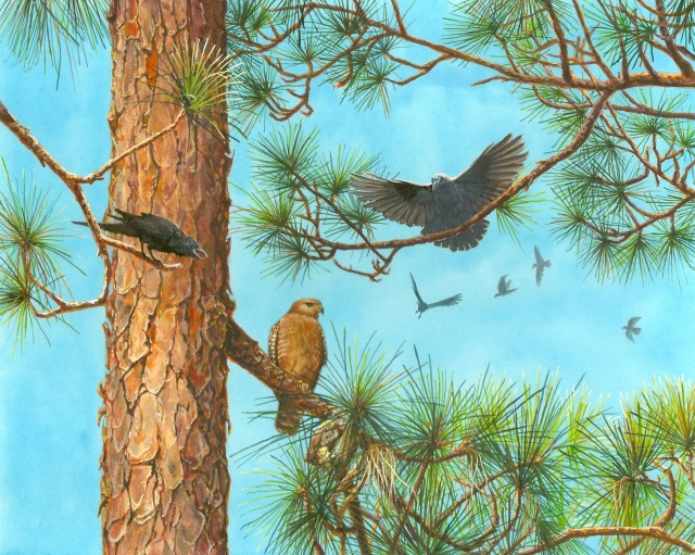 red-shouldered hawk and crow painting by wes siegrist.jpeg