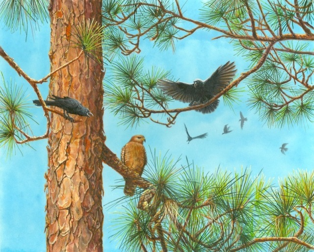 Hawk and American Crow painting by Wes Siegrist.jpg