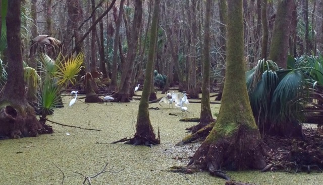 highlands hammock birds.jpg