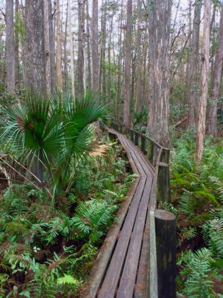 highlands-hammock-boardwalk
