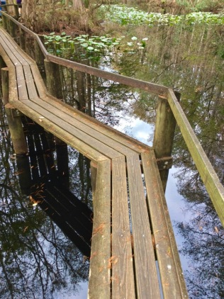 highlands-hammock-catwalk-trail