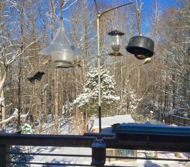 wes and rachelle snow photos.jpg