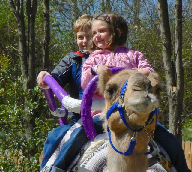 knoxville zoo camel ride