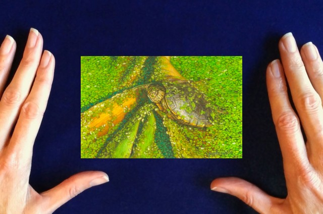 red-eared slider turtle painting by_Rachelle_Siegrist1