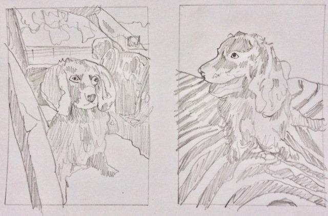 dog commission sketches boykin spaniel