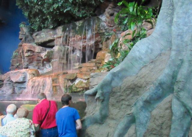 wes siegrist kist gentry at ripleys aquarium